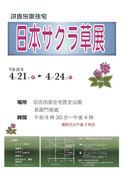 サクラ草ポスター