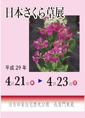 さくら草ポスター