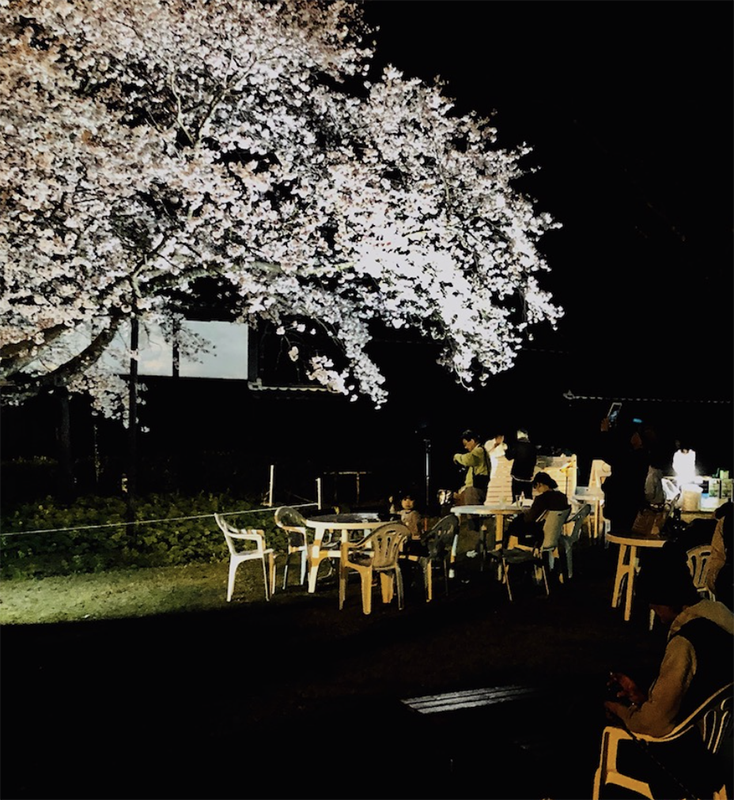 夜桜BAR STAND-1